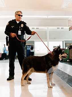 безопсность предприятия, ликвидация воровства: охрана и собаки