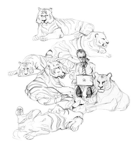 Тигр и коша: бухгалтерия и управление